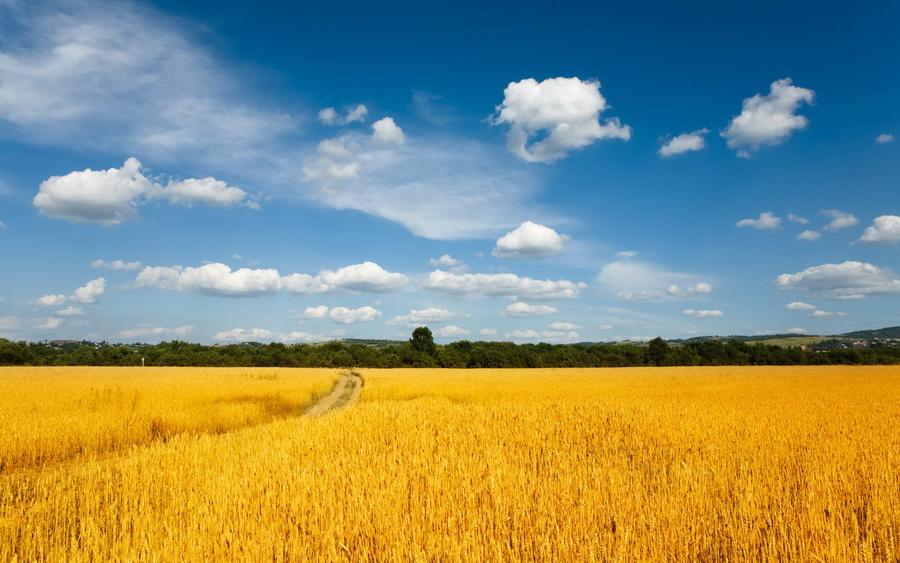 "Результат пошуку зображень за запитом ""агрономія"""